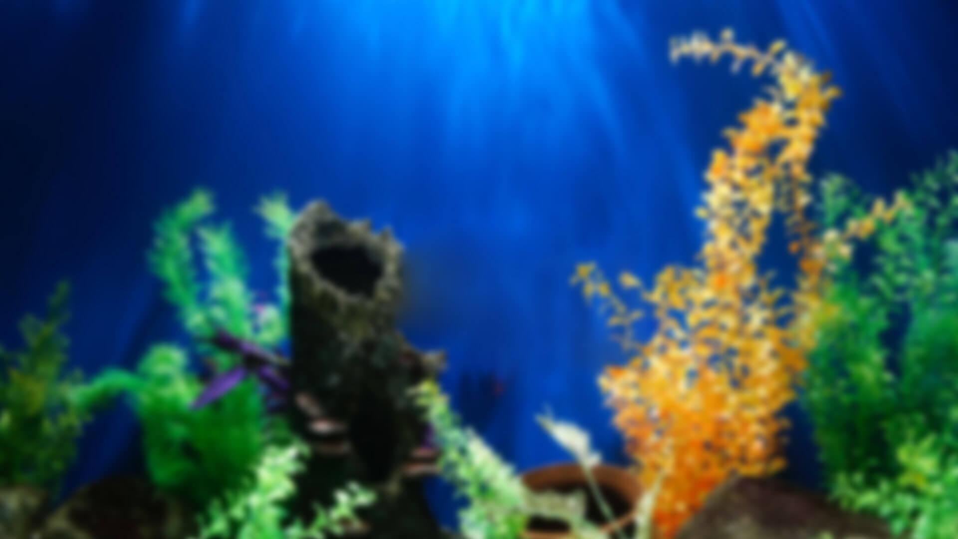 aquarium-hg1